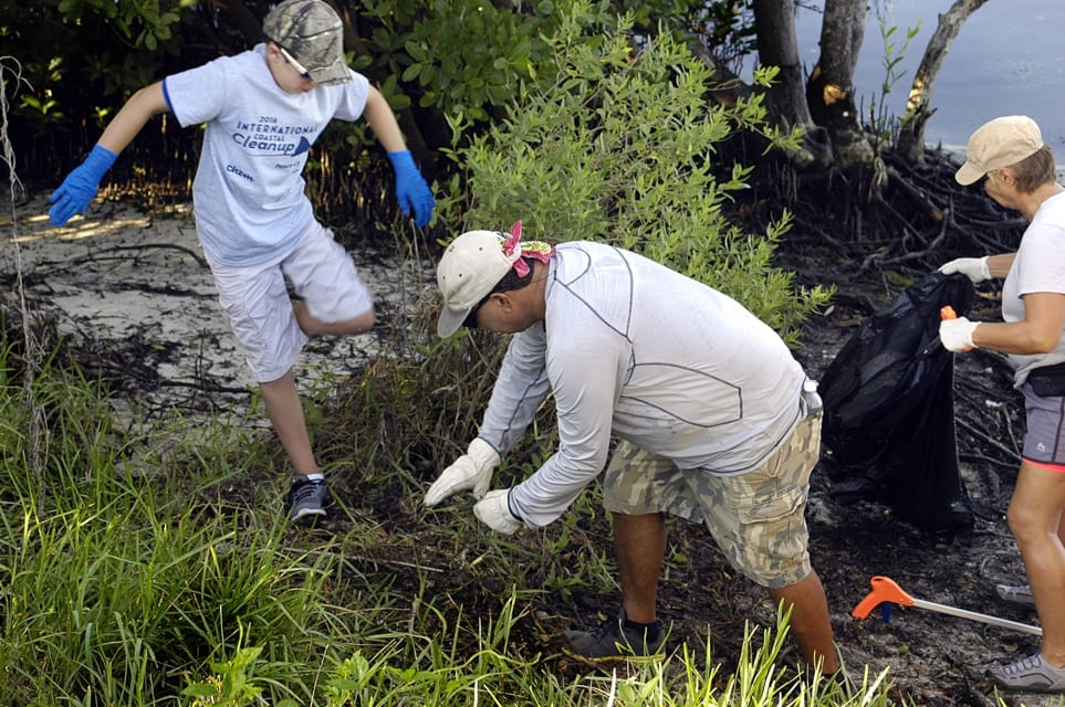 mangrovecleanup