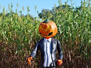 scarecrow-1