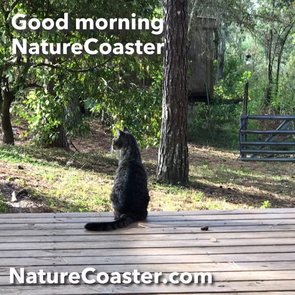 Good morning NatureCoaster