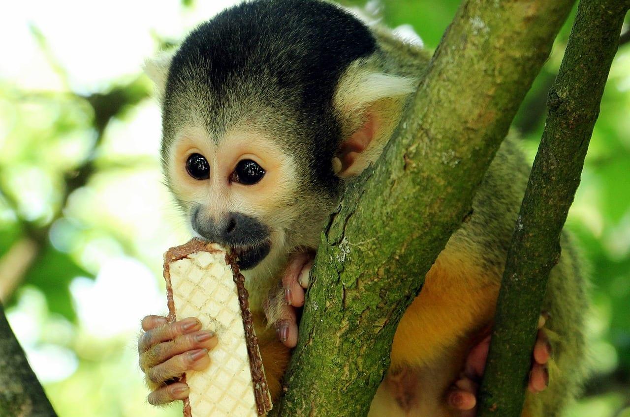New Fwc Rule Prohibits Feeding Of Wild Monkeys